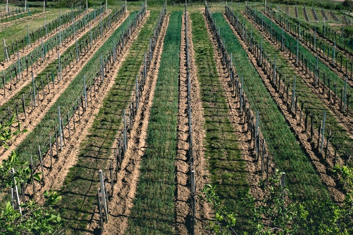 タカムラワインの産地|theDANN media
