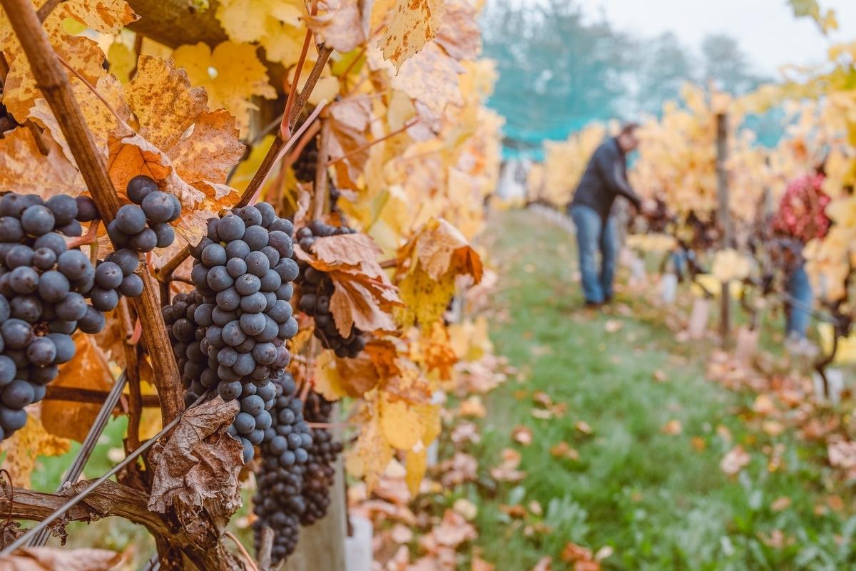 オーガニックワインの産地|theDANN media