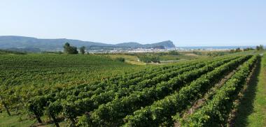 函館ワインの産地|theDANN media