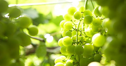 勝沼ワインの味わいや香り|theDANN media