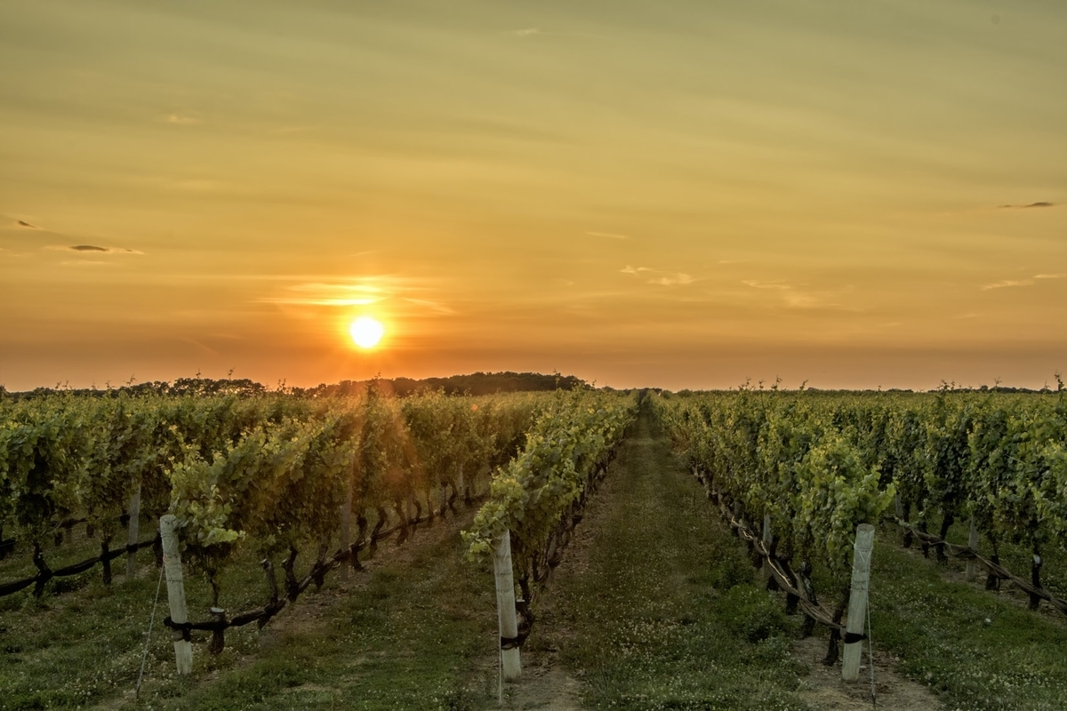 ワインの産地|theDANN media