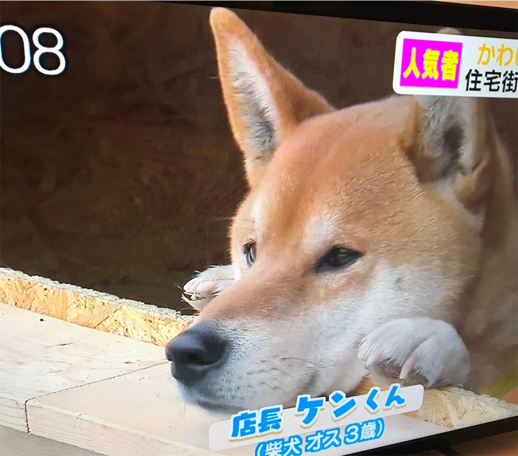 f:id:chanko_bamboo:20190321074252j:image