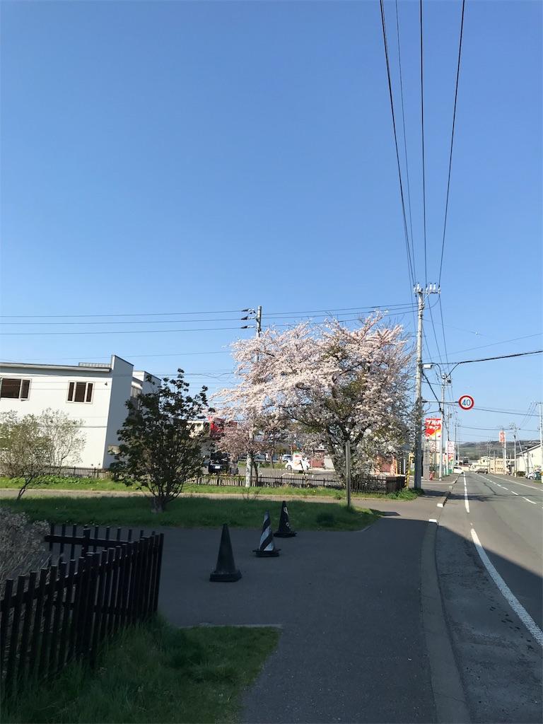 f:id:chanko_bamboo:20190504145455j:image
