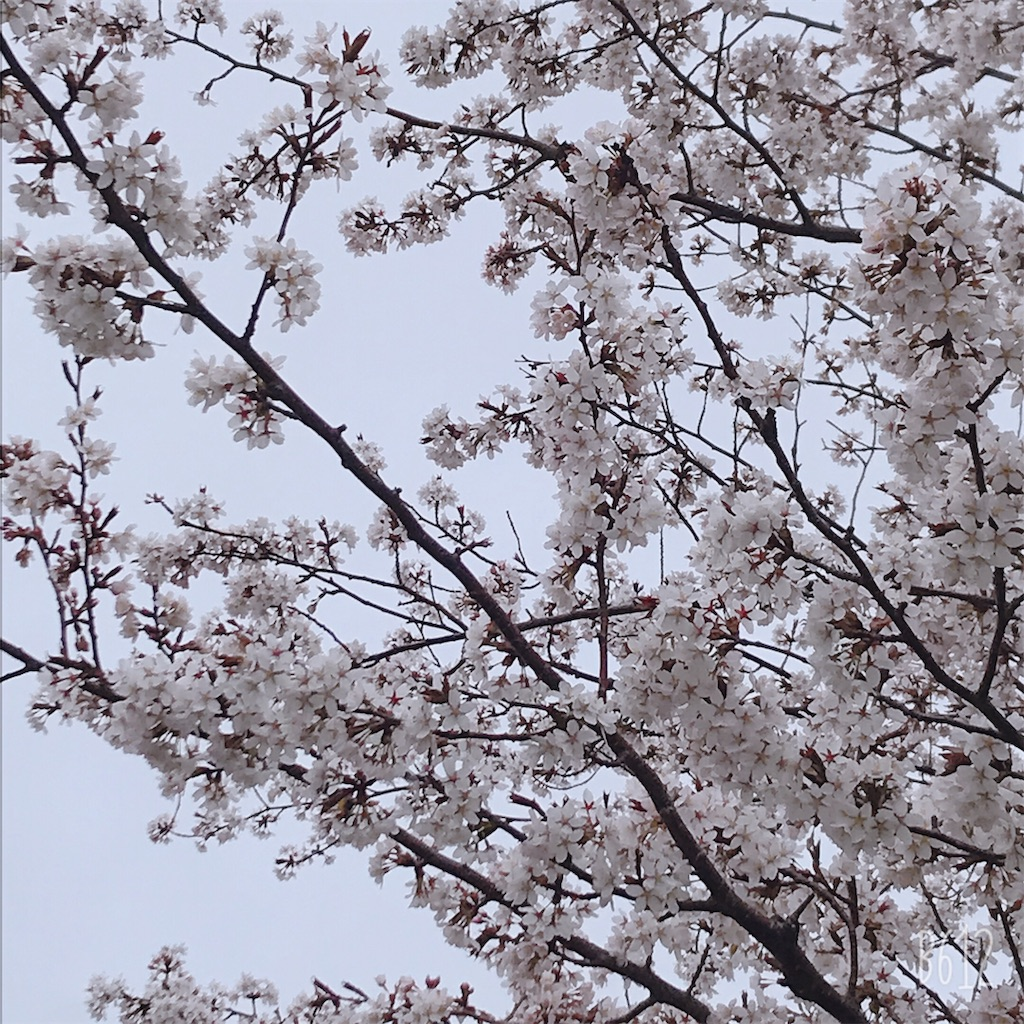 f:id:chanko_bamboo:20190504145501j:image