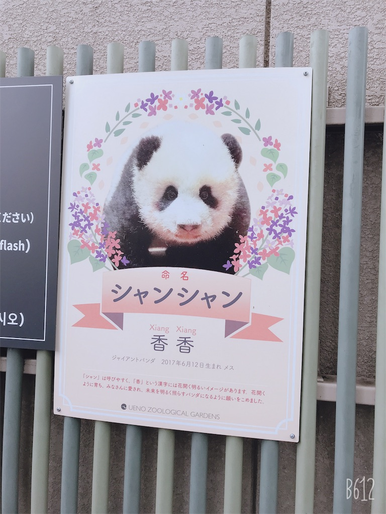 f:id:chanko_bamboo:20191020121209j:image