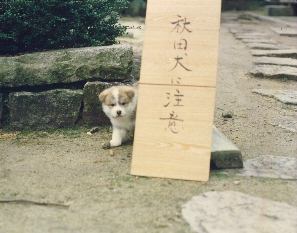 f:id:chanko_bamboo:20200310160721j:image