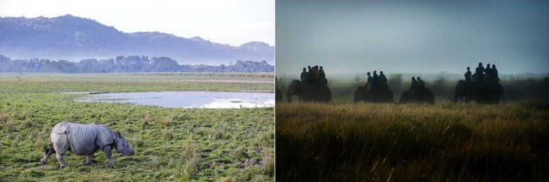 象に乗ってサイを見ることができるカズィランガ国立公園