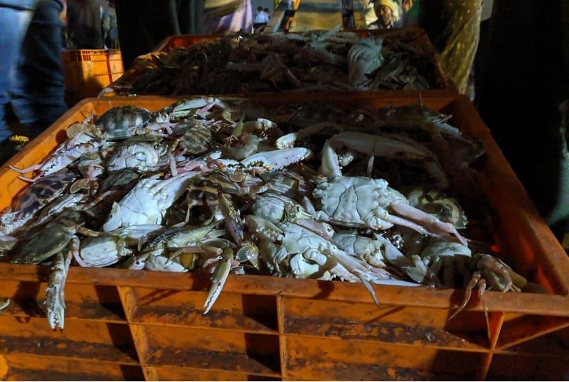 インド・ムンバイのフィッシュマーケットで売られていた新鮮なカニ