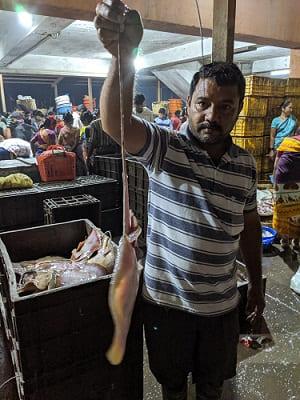 インド・ムンバイのフィッシュマーケットで売られていた新鮮なイカ