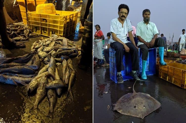 インド・ムンバイのフィッシュマーケットで水揚げされて地面に置かれた魚