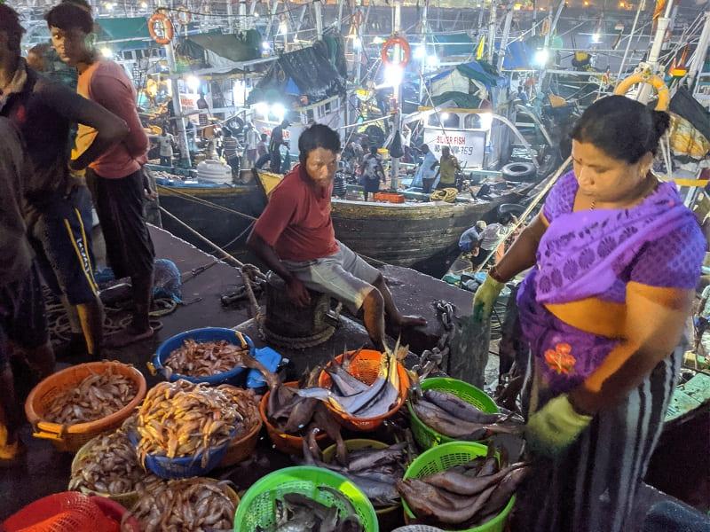 インド・ムンバイのフィッシュマーケットで売られていた新鮮な魚