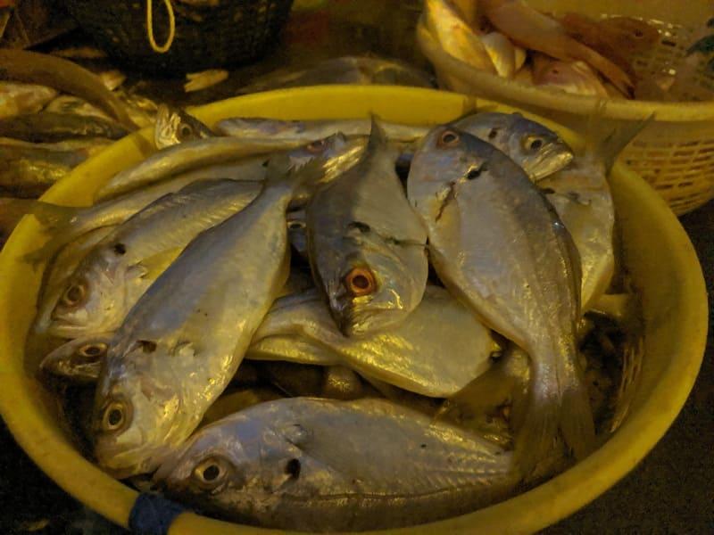 インド・ムンバイのフィッシュマーケットで売られていた魚②