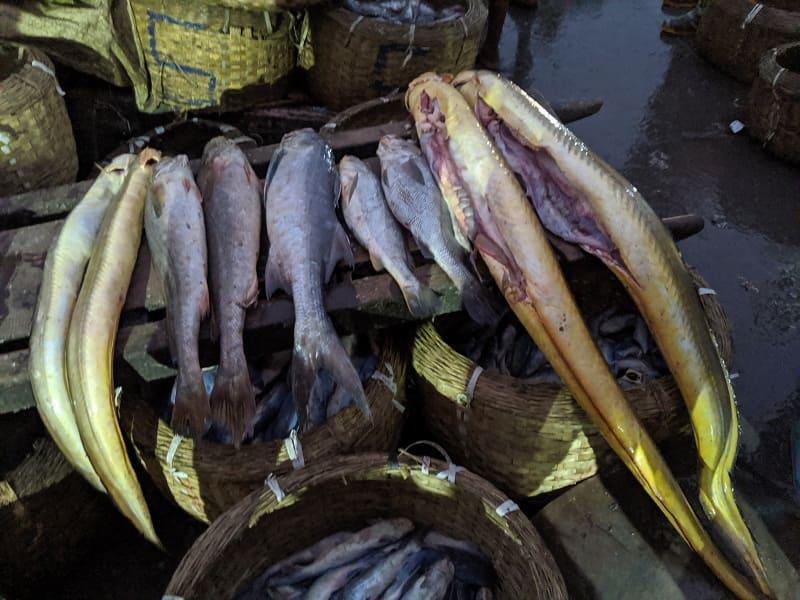 インド・ムンバイのフィッシュマーケットで売られていた魚③