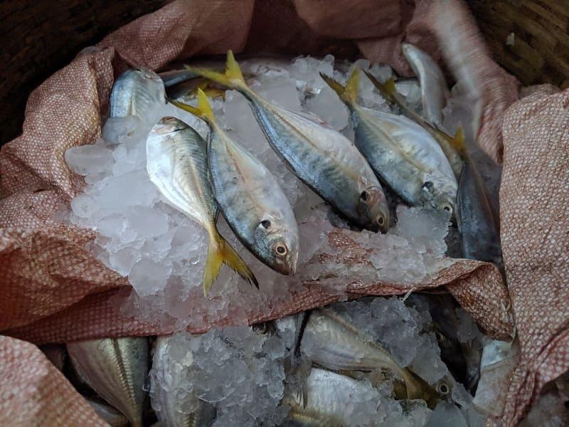 インド・ムンバイのフィッシュマーケットで売られていた魚①