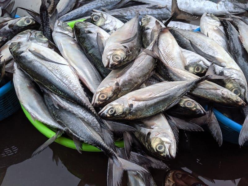 インド・ムンバイのフィッシュマーケットで売られていた魚⑥