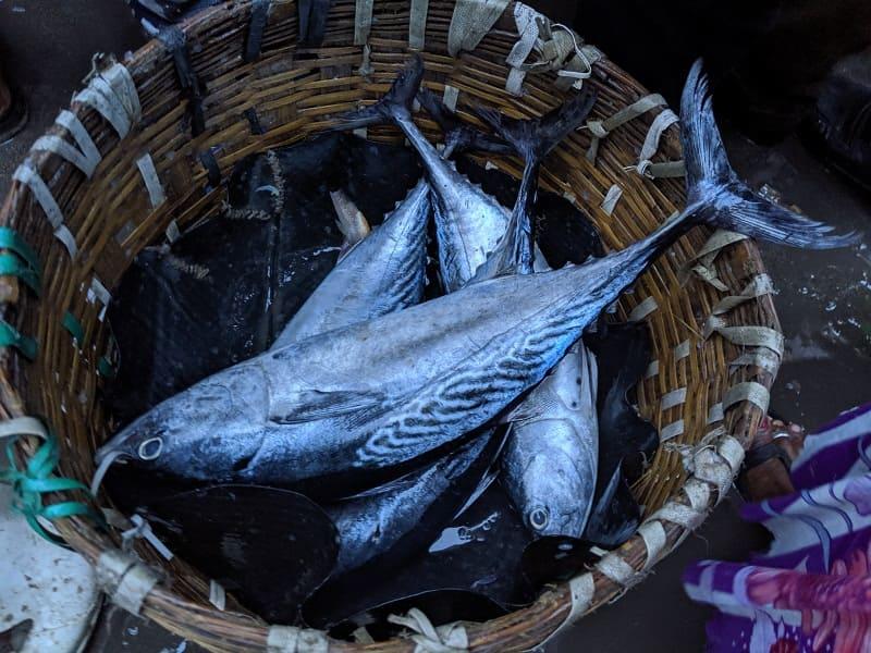 インド・ムンバイのフィッシュマーケットで売られていた魚⑤