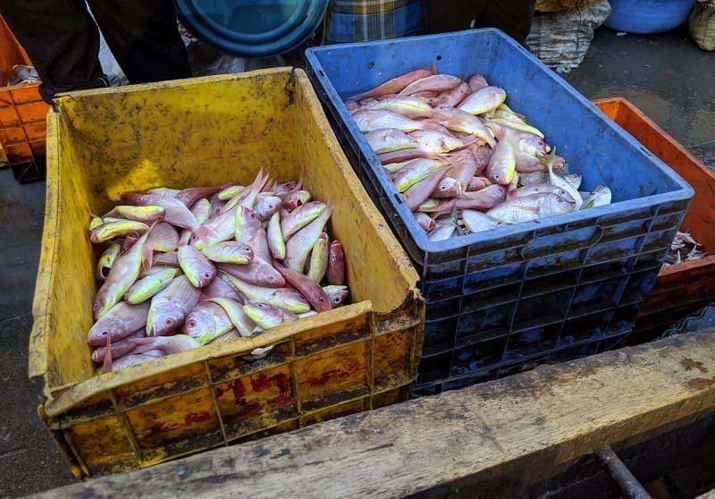 インド・ムンバイのフィッシュマーケットで売られていた魚④