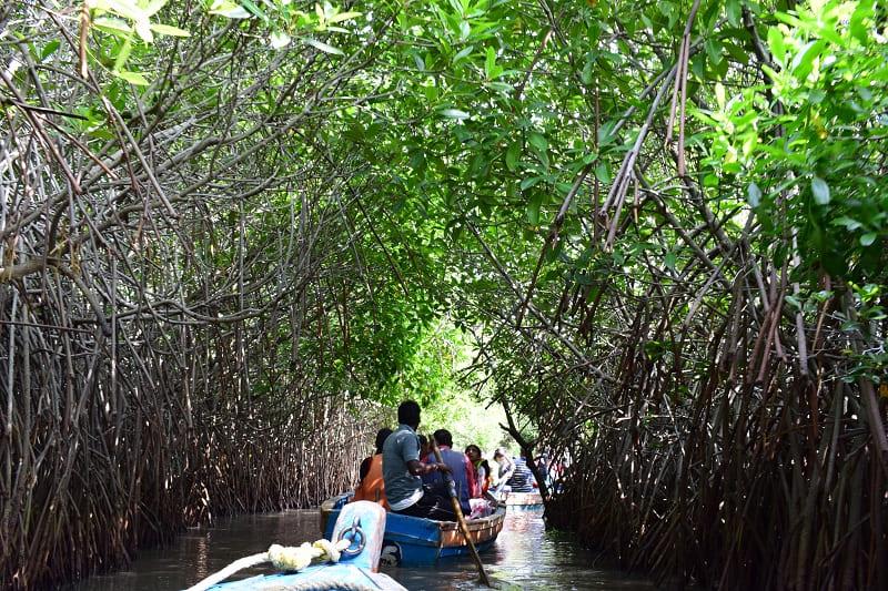 ピチャワラムマングローブ林の写真(マングローブのトンネル②)