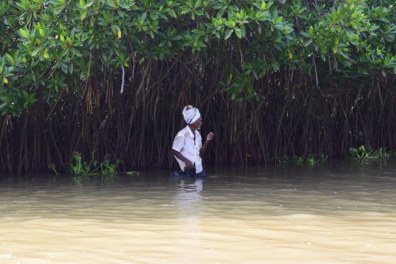 ピチャワラムマングローブ林の写真(マングローブ林で修行する男性)
