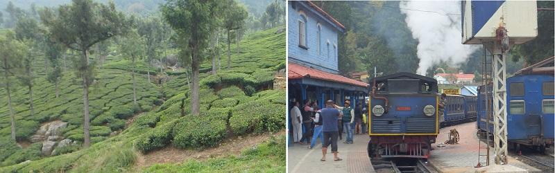 ニルギリの茶畑と登山鉄道