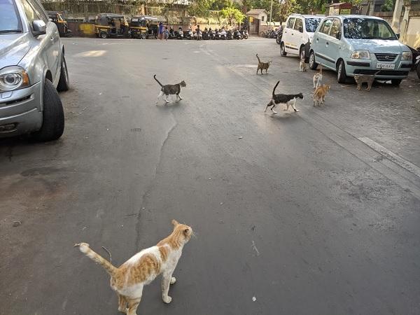 モスクの前にいた大量の野良猫