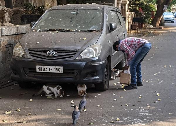 野良猫に餌をあげるイスラム教徒のおじさん②