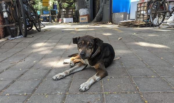 ムンバイの路上の犬