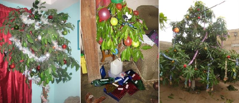 マンゴーのクリスマスツリー