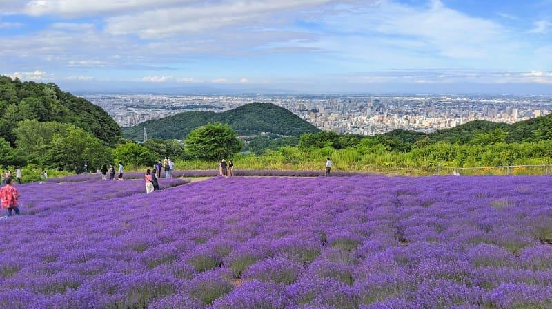 札幌幌見峠のラベンダー畑と札幌市街地の景色