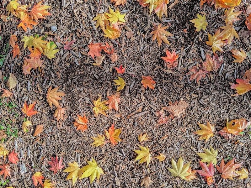 大滝ナイアガラの滝の遊歩道の落ち葉