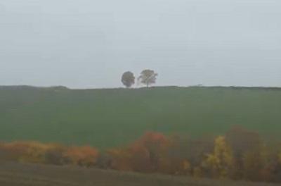 バスの車窓から眺めた親子の木