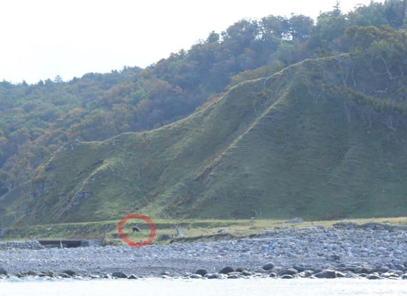 知床 ルシャ湾(ヒグマ)5