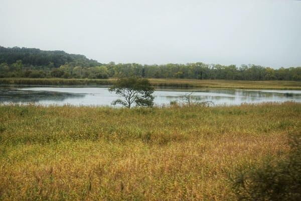 釧路湿原2