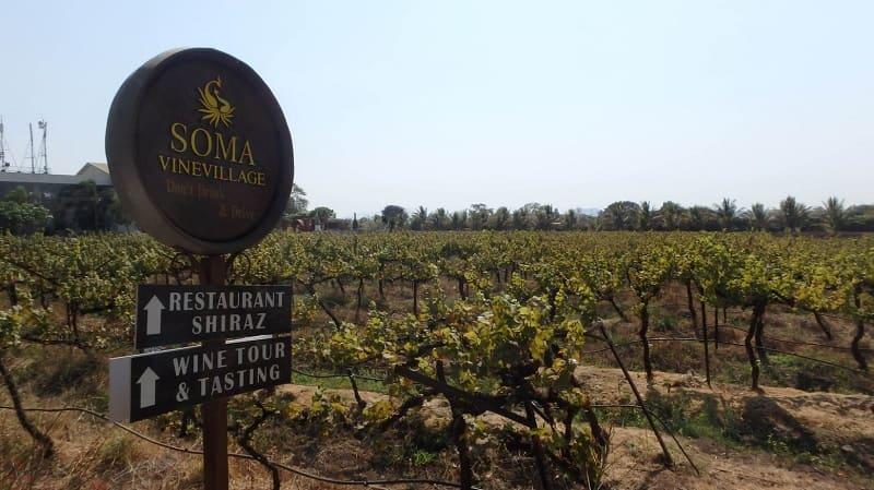 Soma Vineyard