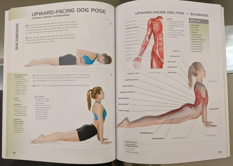 ヨガの解剖学の本の中身
