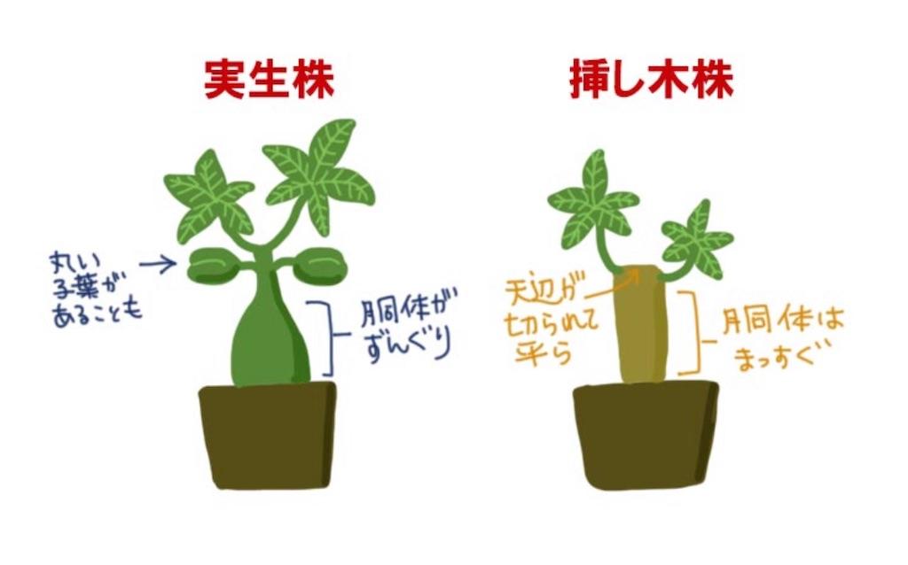 f:id:chankotochan:20210514085929j:image