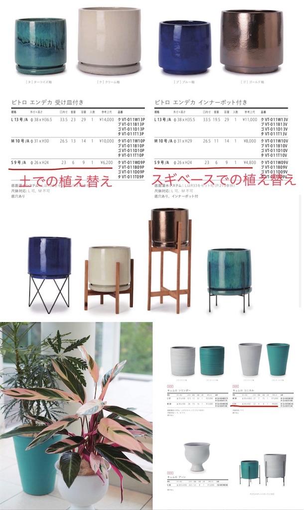 f:id:chankotochan:20210514090154j:image