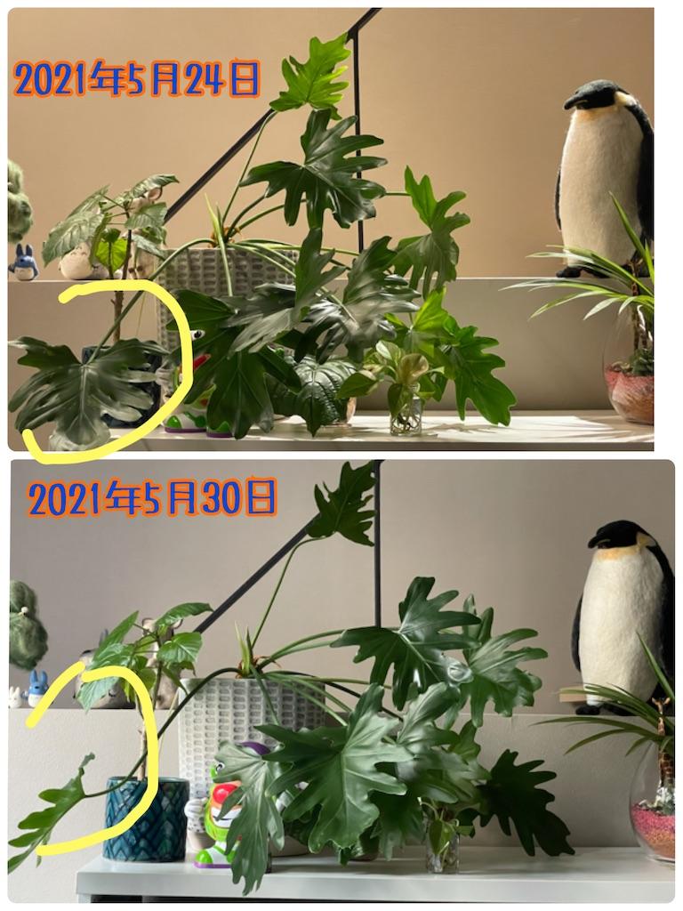 f:id:chankotochan:20210530064803j:image