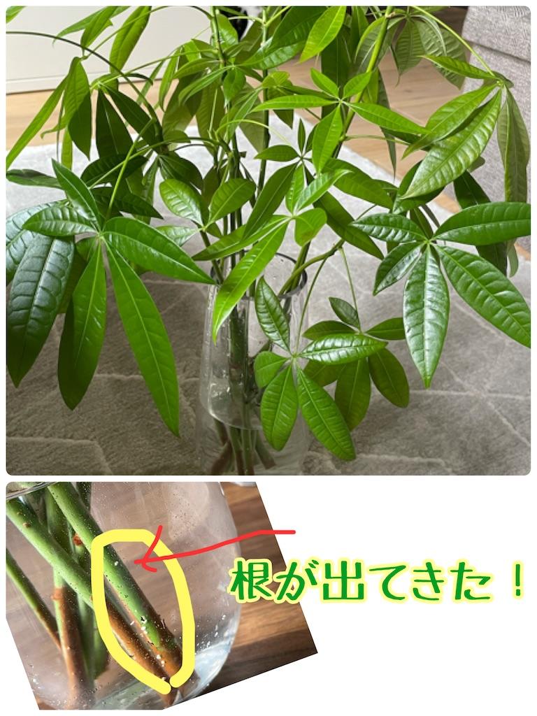 f:id:chankotochan:20210614090056j:image