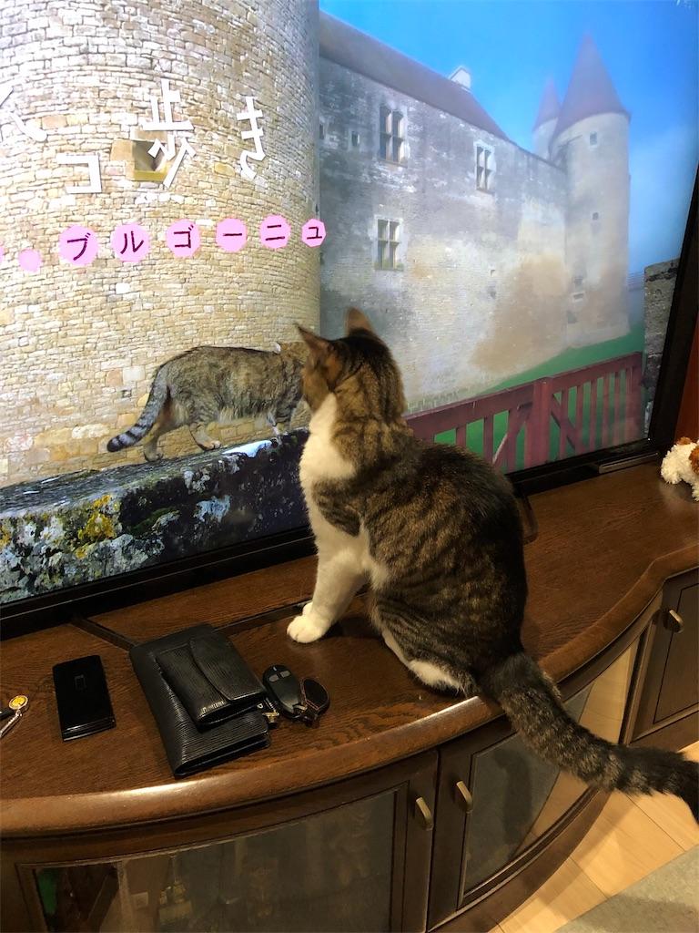 f:id:charinkooyaji:20190710080713j:image