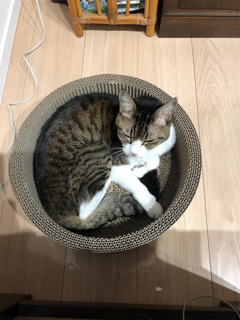 f:id:charinkooyaji:20201123171955j:image