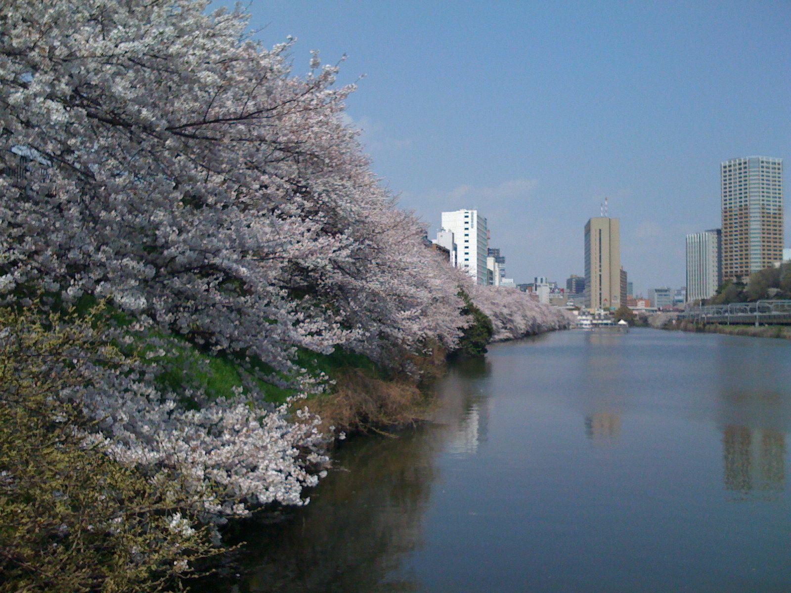 美しき日本(15) / 濠と桜と東京タワー