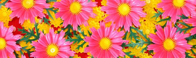 食品装飾用造花 菊