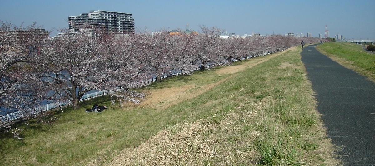 荒川サイクリングロード 桜並木」