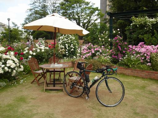 荒川サイクリングロード バラ園