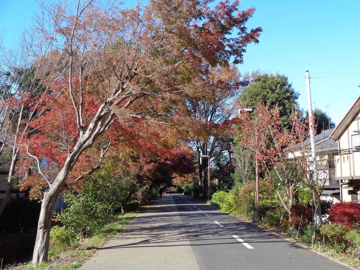 多摩湖自転車道の紅葉