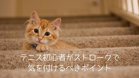 f:id:chatoracat:20181020224054p:plain
