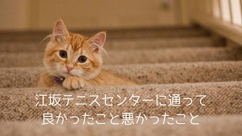 f:id:chatoracat:20181020233152p:plain