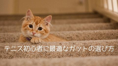 f:id:chatoracat:20181021003250p:plain