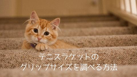 f:id:chatoracat:20181021003438p:plain